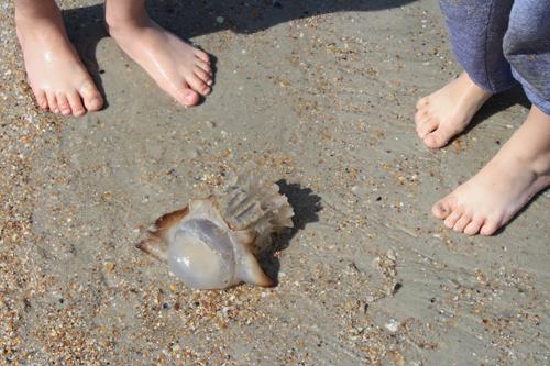 nature walk: jacksonville, florida - Imagine Childhood