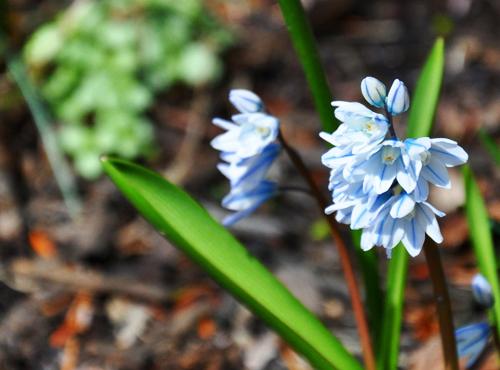 1.flower