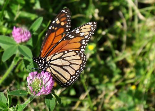 1.butterfly