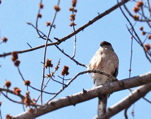 1.bird