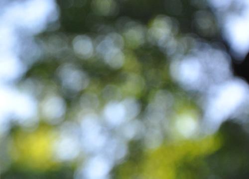 Treeleaves