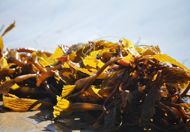 Seaweed.2