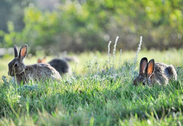 2.bunny