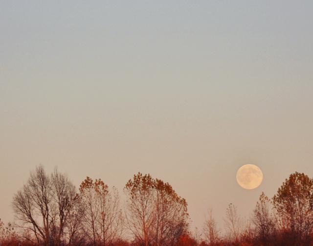 Moontrees2
