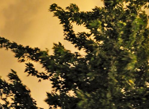 3.tree.500