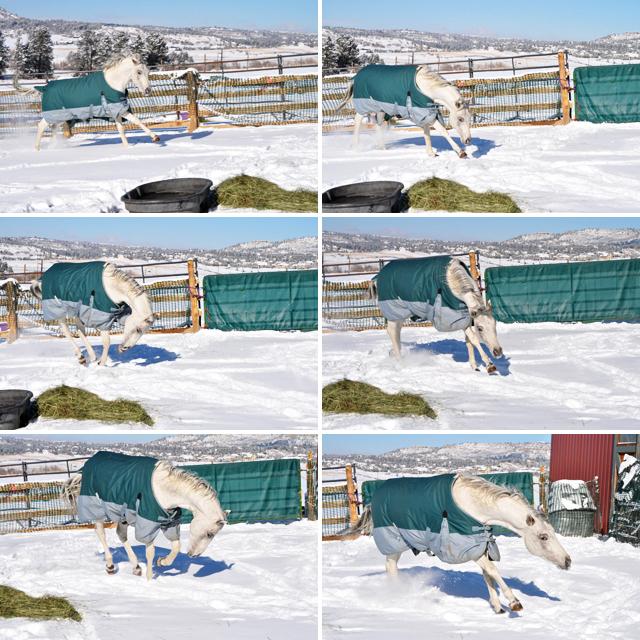 4.snowcomp