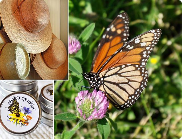 Butterflysuite