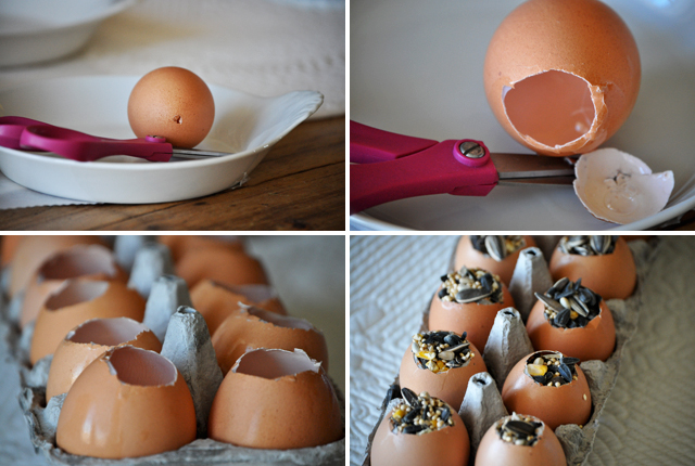 Eggcomp
