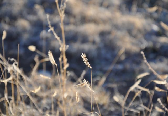 Grass_detail