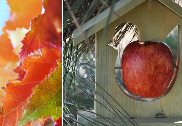 Apple.leaves