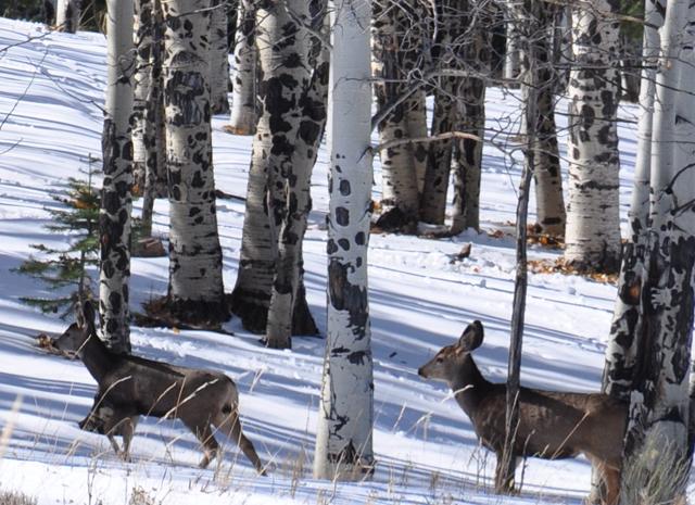 Deer.two