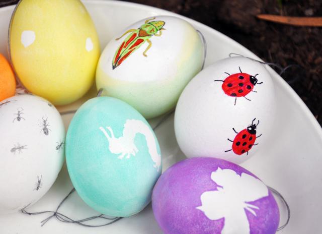 Bug.eggs