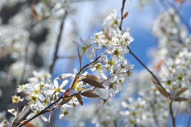 Spring.branch.640