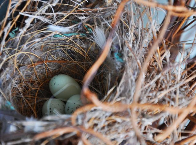 Egg.nest