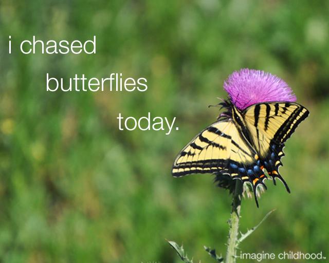 Butterflies640