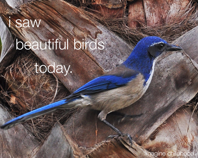 Birds2.640