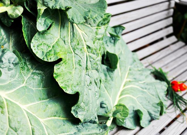Garden.recipe