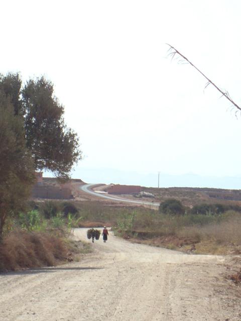 Nature walk (6)