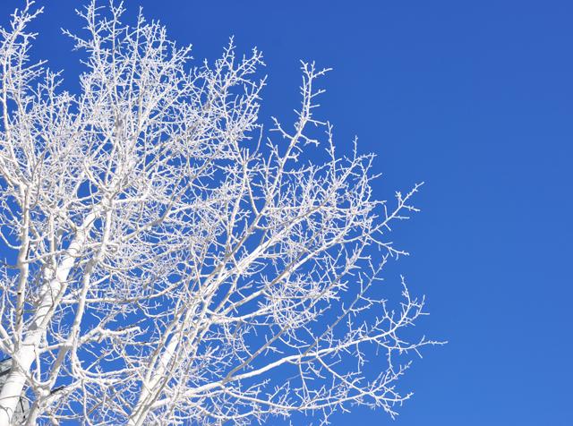 Ice.tree