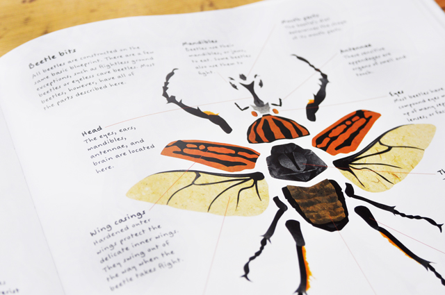 tell me a story: the beetle book - Imagine Childhood : Magic ...