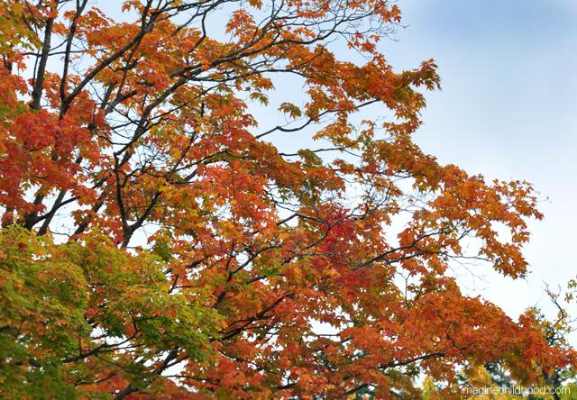 Leaves.sky