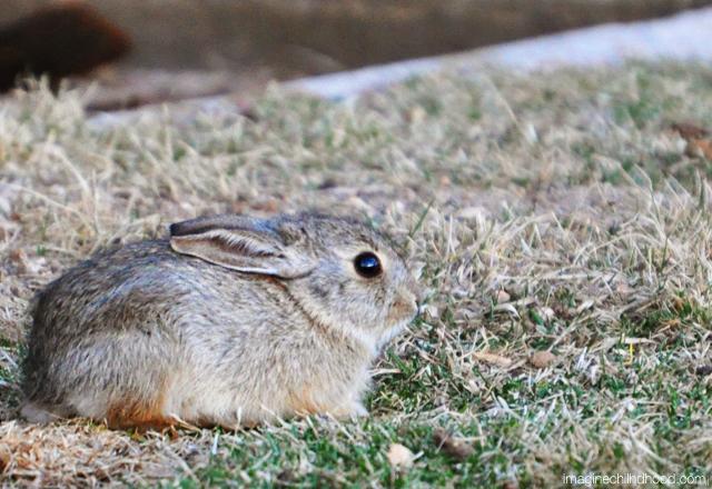 Bunny.3