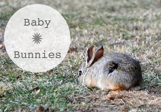 Baby.bunnies