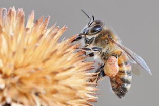 Bees.knees