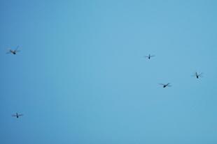 Dragonfly.swarm