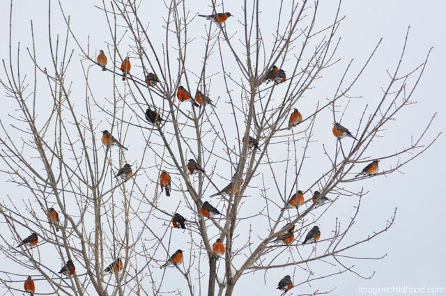 Bird.tree