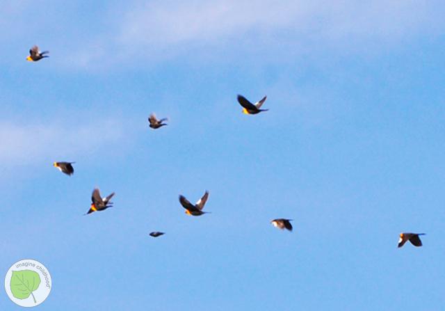 4.birds