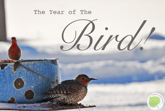 Bird.year