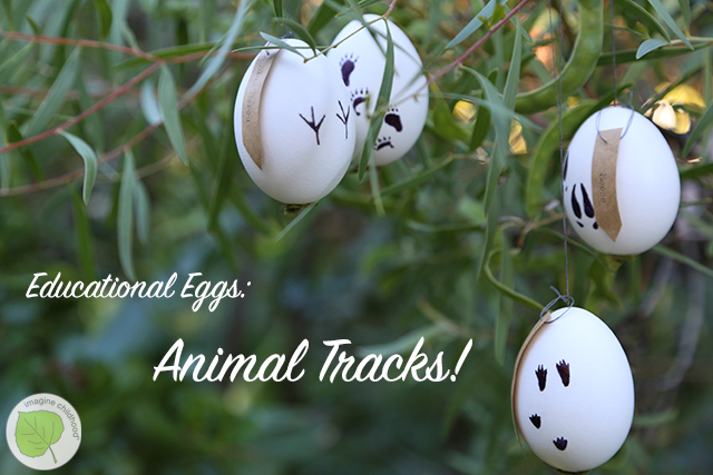 Tracking.eggs.darker