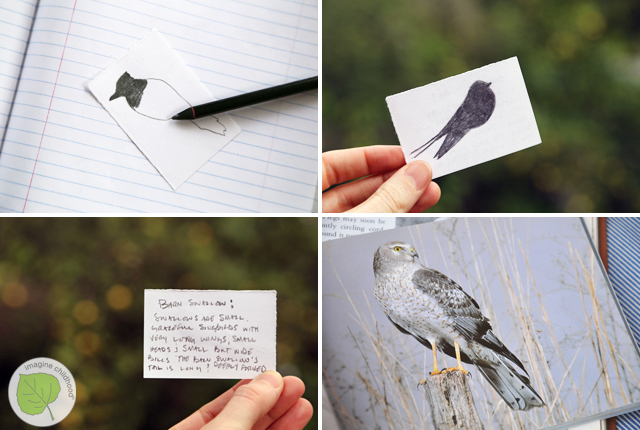 6.birds