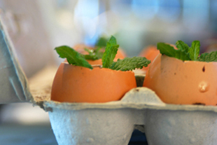 Egg.seedings
