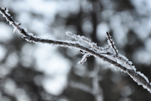 Hoar.frost