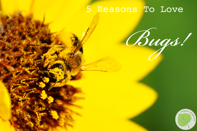 1.5.reasons.bugs.2