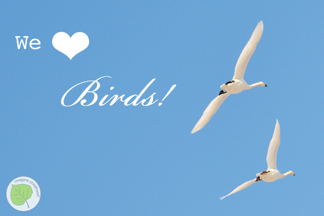 5.reasons.birds