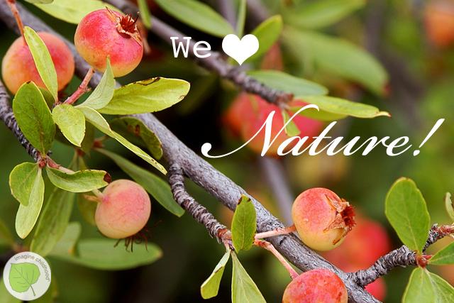 5.reasons.nature
