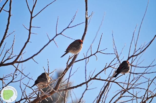 3.bird