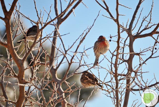 5.birds