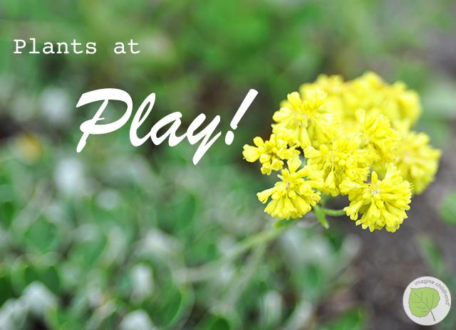 Play.plants